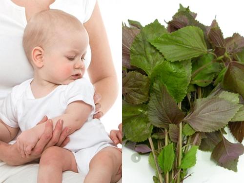 Cho trẻ uống nước lá tía tô